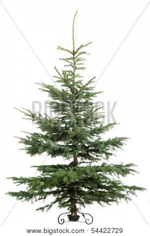 Christmas tree  isolated on white background.