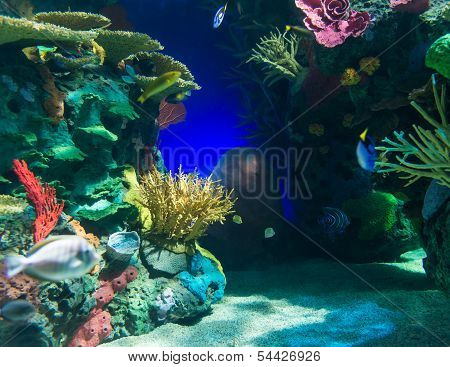 Scenes Of The Coral Reef