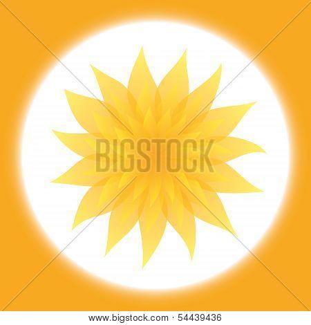 Sunny Yellow Flower In Orange Frame