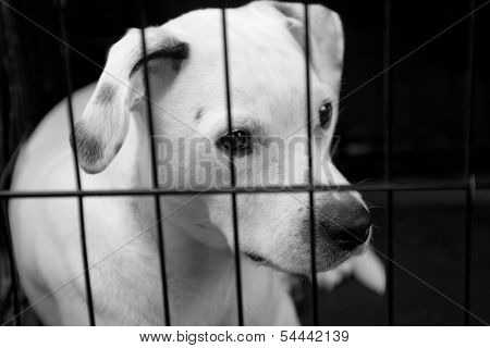 Lonely Dog In A Cage