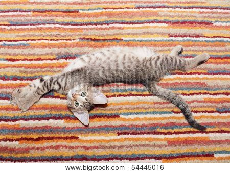 Tabby Kitten With Spotty Belly Lying On Striped Rug