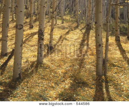 Yellow Forest Floor