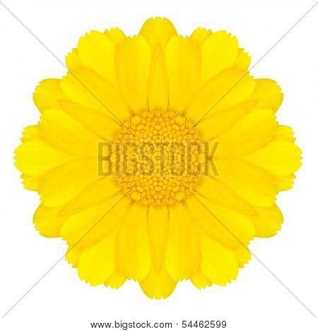 Yellow Concentric Daisy Flower Isolated On White. Mandala Design