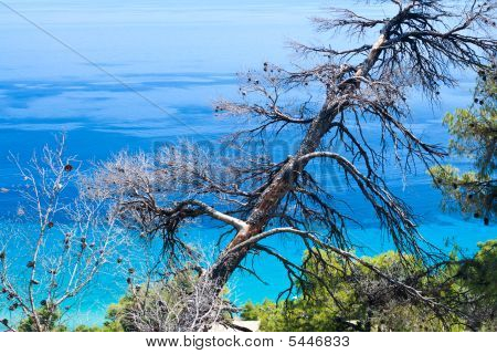 Burned-out Tree And Blue Sea.