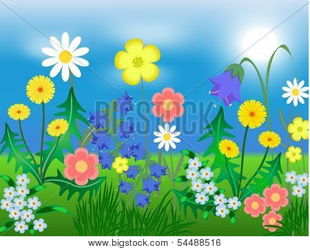EPS10 vector illustration Bright wild flowers against the sky and a grass