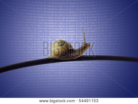 Snail On Ethernet Cable