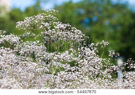 Pretty White Flowers Blooming In A Garden