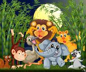 foto of rainforest animal  - Illustration of a rainforest with animals strolling in the middle of the night - JPG