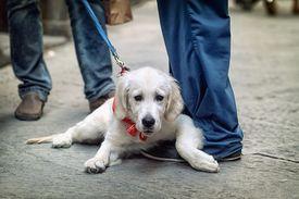 image of street-walker  - People walking on the street with dog on leash  - JPG