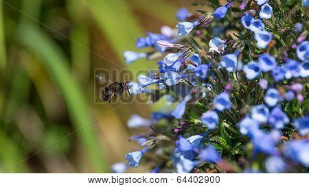 Spring Flowers & Bee