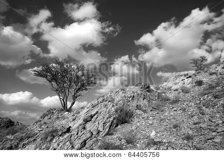 Tree in the uae mountains against clouds - B&W treatment