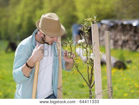 Gardener looking after trees