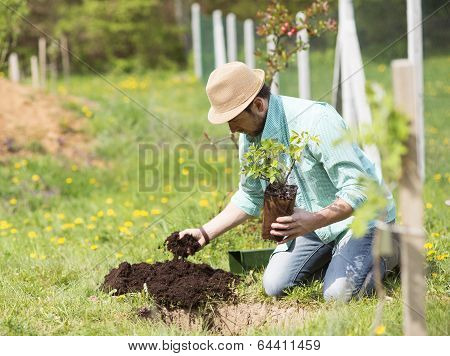 Young man planting in the garden