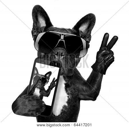 Selfie Dog poster