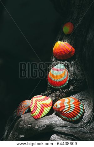 Dark atmospheric image of colorful hand painted striped seashells arranged in a decorative artistic composition on a piece of drift wood, with copyspace