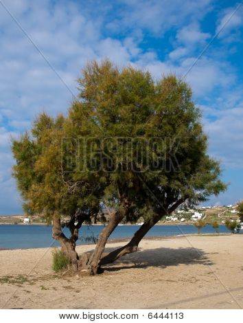 Lonely tree on the beach near the sea