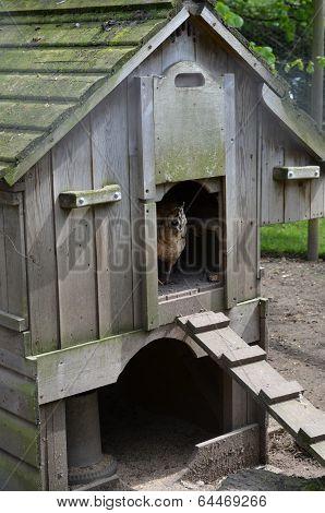 Chicken hen house.
