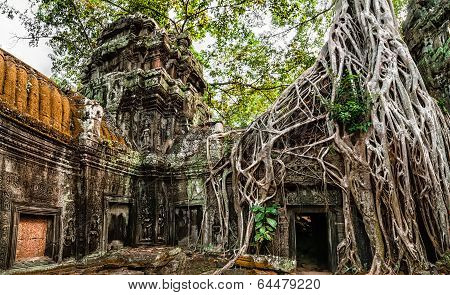 Ta Prohm temple with giant banyan tree at Angkor Wat complex Siem Reap Cambodia