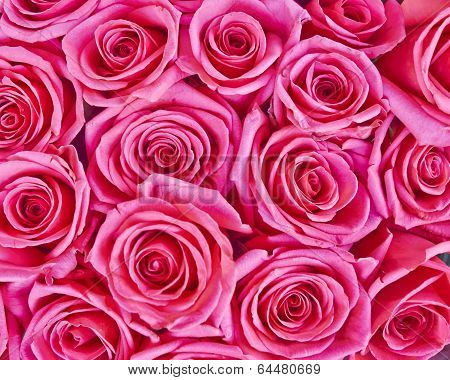 rose flowers bouquet, natural background