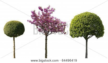 isolated ornamental trees