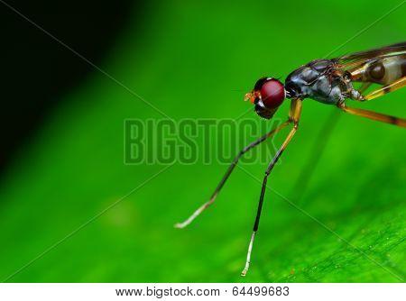Macro Shot Of A Hornet