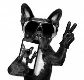 picture of toy phone  - french bulldog taking a selfie with cool fancy sunglasses