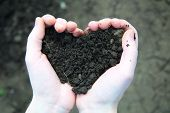 stock photo of rich soil  - Hand holding black soil in the form of heart on soil background - JPG
