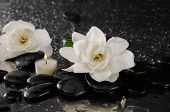 picture of gardenia  - Two gardenia flower and candle on pebbles  - JPG