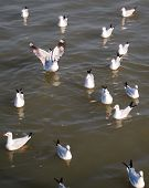 stock photo of flock seagulls  - a flock of seagulls are floating on the sea - JPG