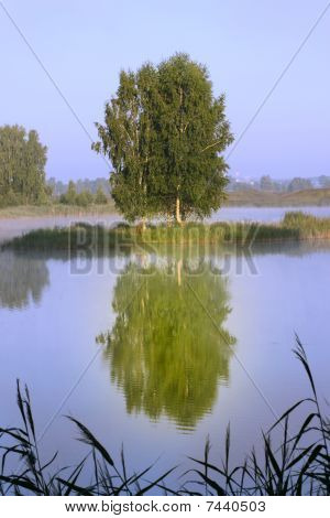 Summer Tree Reflected In Water