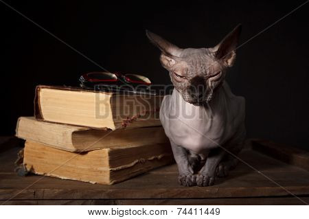 Sphynx Cat And Books