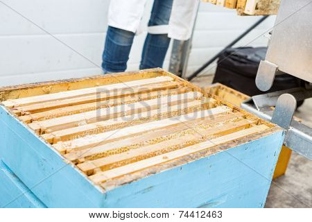 Closeup of honeycomb frames in apiary with beekeeper standing in background at factory