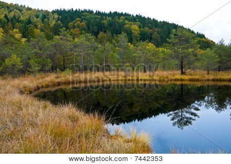 Swamp In The Romanian Mountains