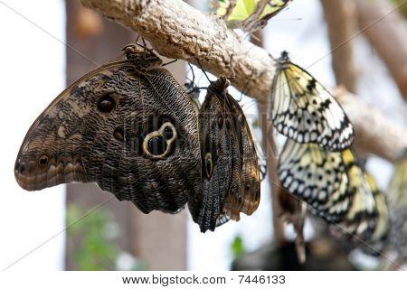 Butterflies On Branch Of Tree