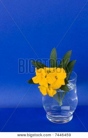 Glass With Aegean Wallflower (Erysimum Cheiri)