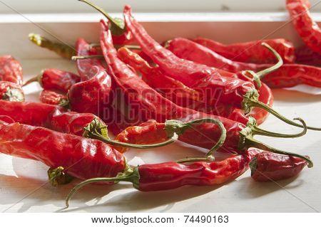 Red Pepper In Sunlight.