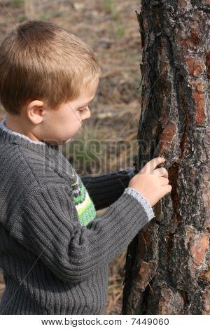 Boy Chipping Bark