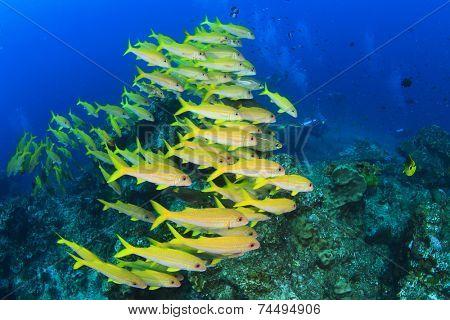 School of fish on coral reef in ocean