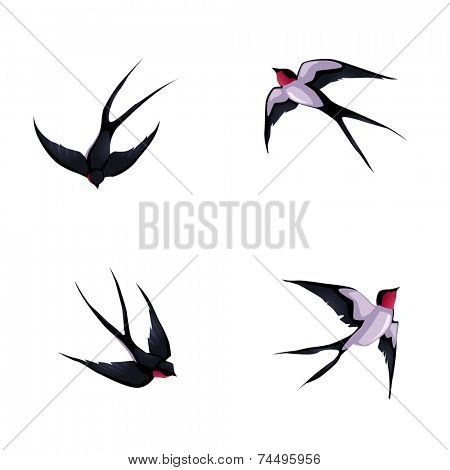 Four swallows. Vector cartoon isolated animals.