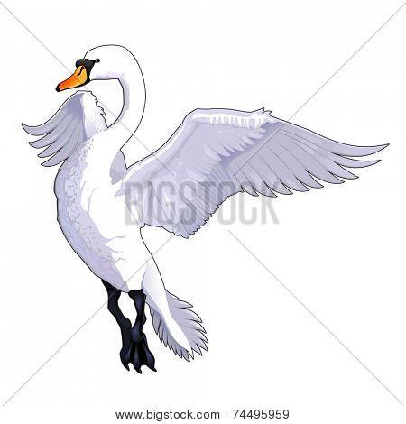 Flying swan. Vector isolated animal.