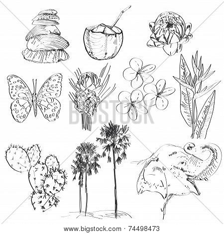 Set Of Doodle Sketch Strelitzia, Plumeria, Lotus, Elephant, Palm, Coconut, Cactus, Butterflies And S