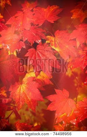 Autumn at Westonbirt Arboretum - abstract leaf design