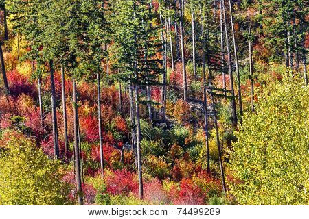 Fall Colors Mountain Sides Forest Stevens Pass Leavenworth Washington