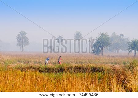 Indian Rural Man And Woman