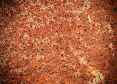 picture of rusty-spotted  - The Rusty Metal Texture detail for Background - JPG