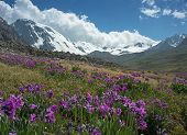 foto of shan  - This is a general view of Tien Shan Mountains in the Almaty precincts - JPG