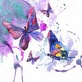 pic of summer insects  - Abstract watercolor background with beautiful butterflies - JPG