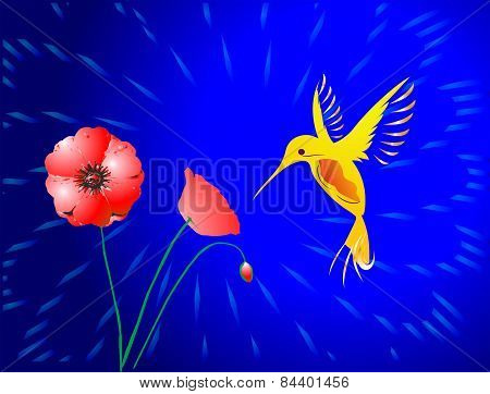 hummingbird and poppies,