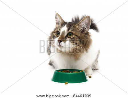 Beautiful Fluffy Kitten Sits Beside A Bowl Of Food On A White Background