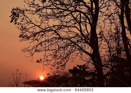 Evening Backlight tree